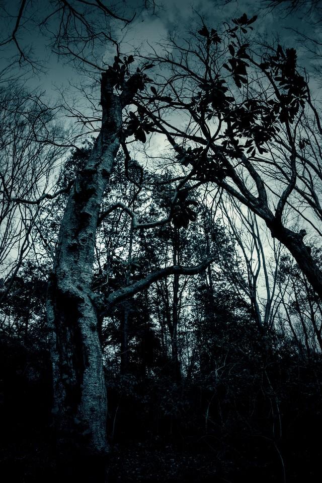 不気味な木々の写真