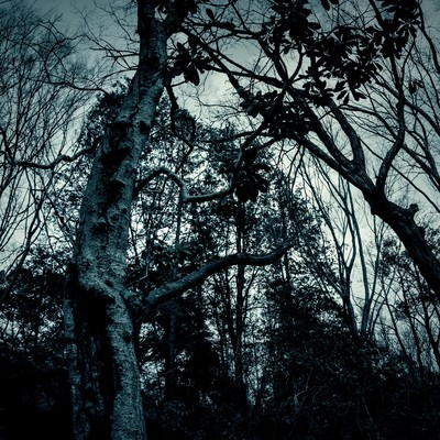「不気味な木々」の写真素材