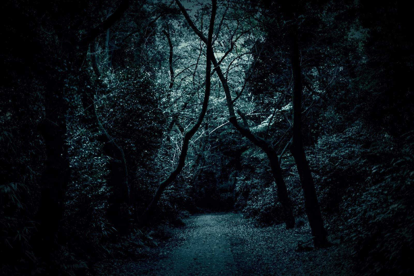 「木々の中の薄暗い道」の写真