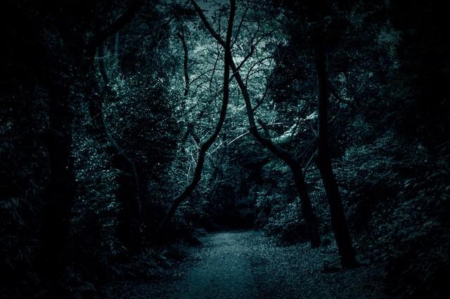 木々の中の薄暗い道の写真