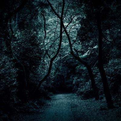 「木々の中の薄暗い道」の写真素材