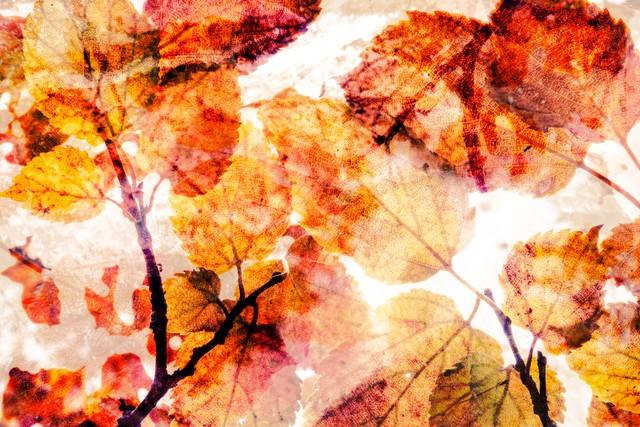 記憶の紅葉(フォトモンタージュ)の写真