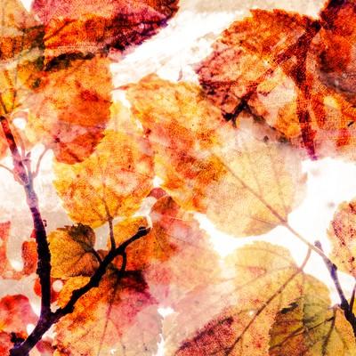 「記憶の紅葉(フォトモンタージュ)」の写真素材