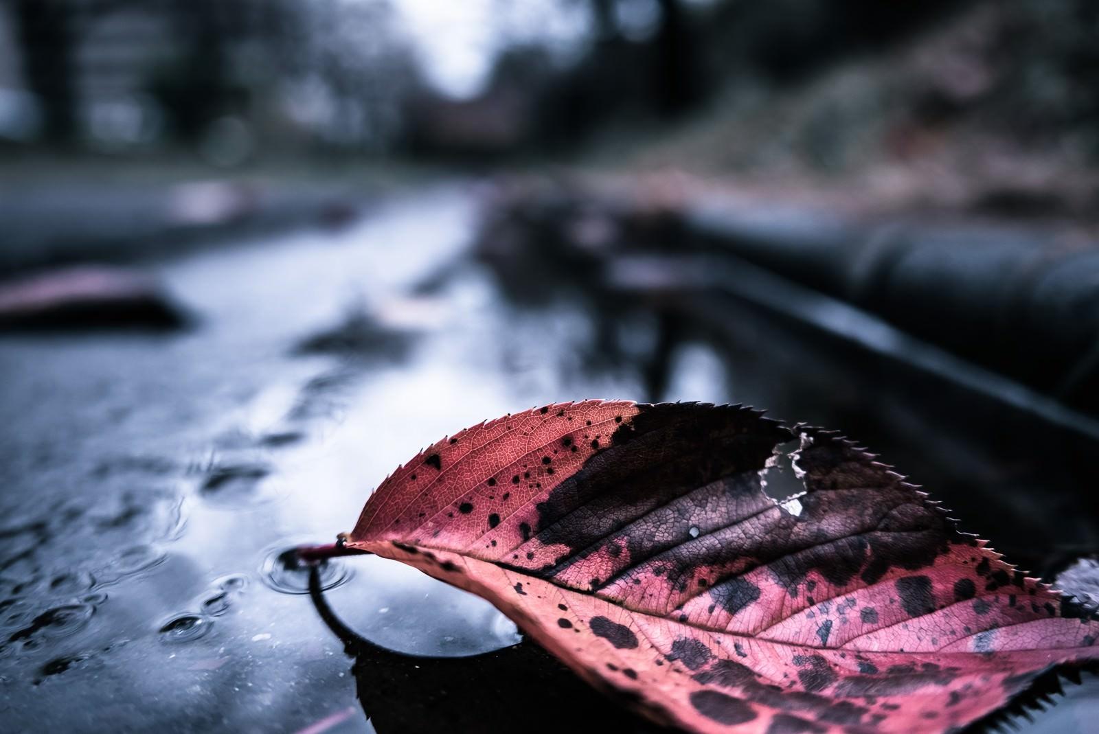 「雨上がりと落ち葉」の写真