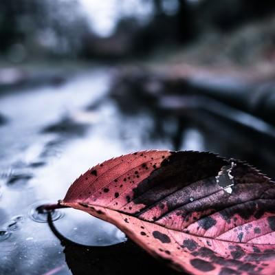 雨上がりと落ち葉の写真