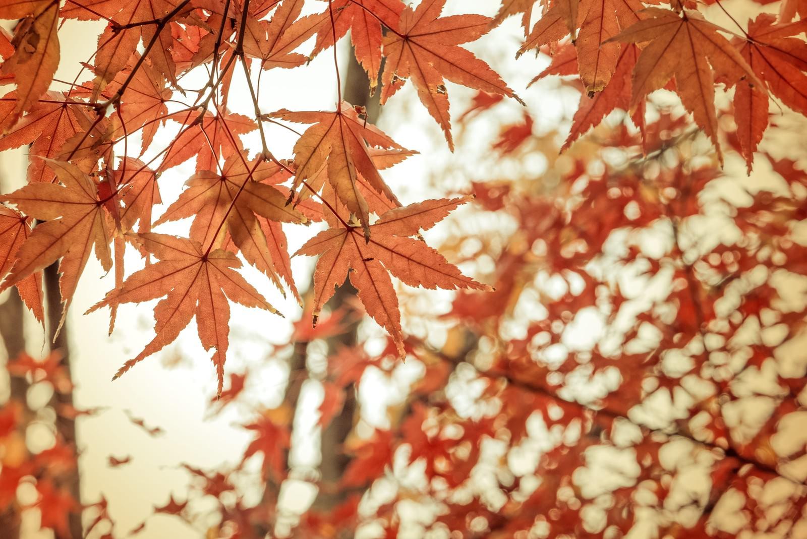 「紅葉と和」の写真