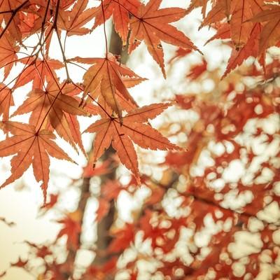 紅葉と和の写真