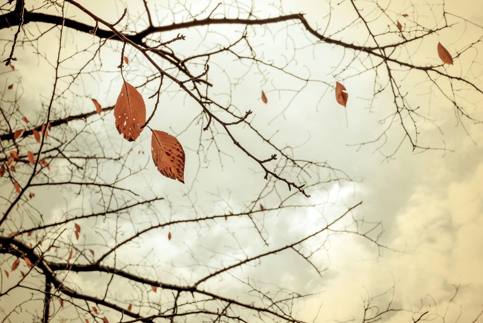 「冬を迎える」の写真