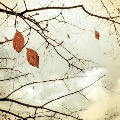 「冬を迎える」の写真素材