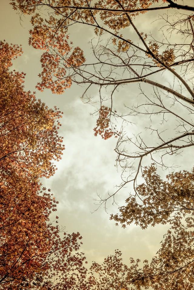 曇り空と紅葉の写真