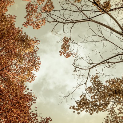「曇り空と紅葉」の写真素材