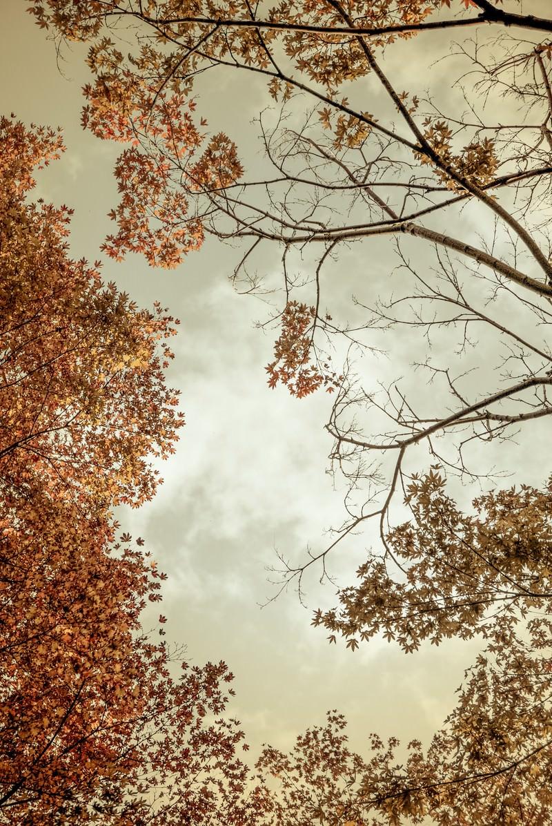 「曇り空と紅葉」の写真