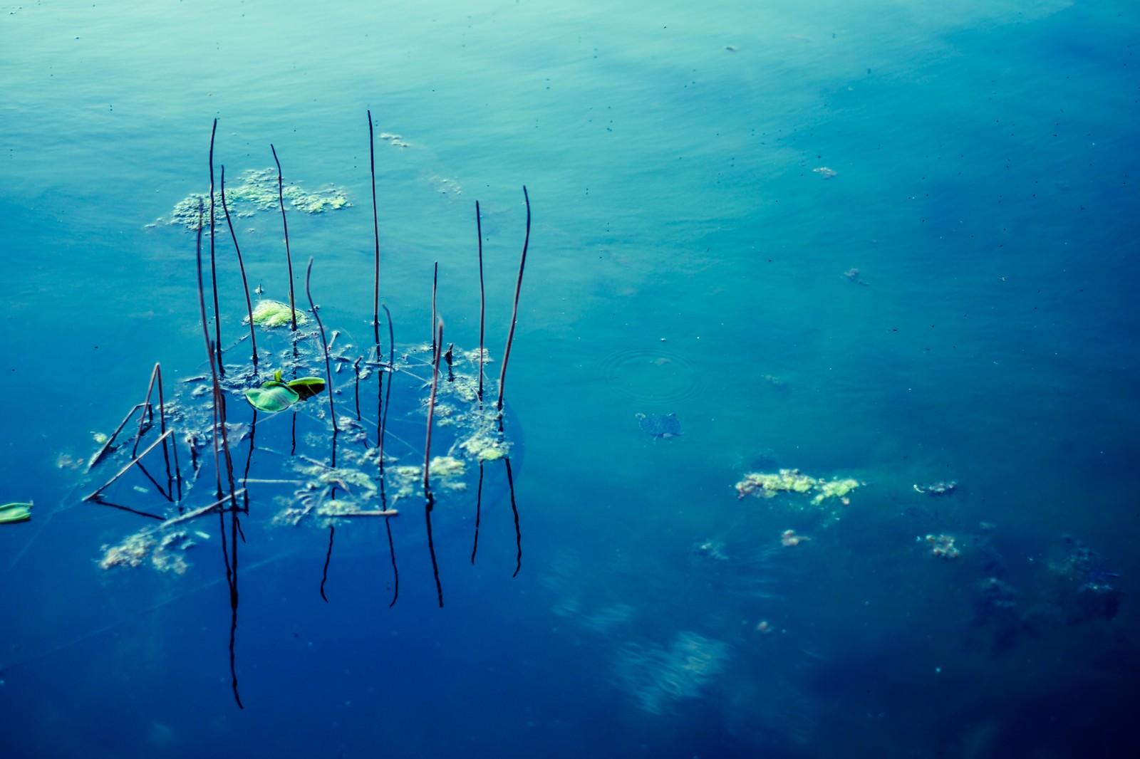 「青い水面」の写真