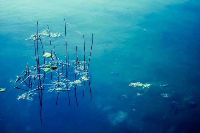 青い水面の写真