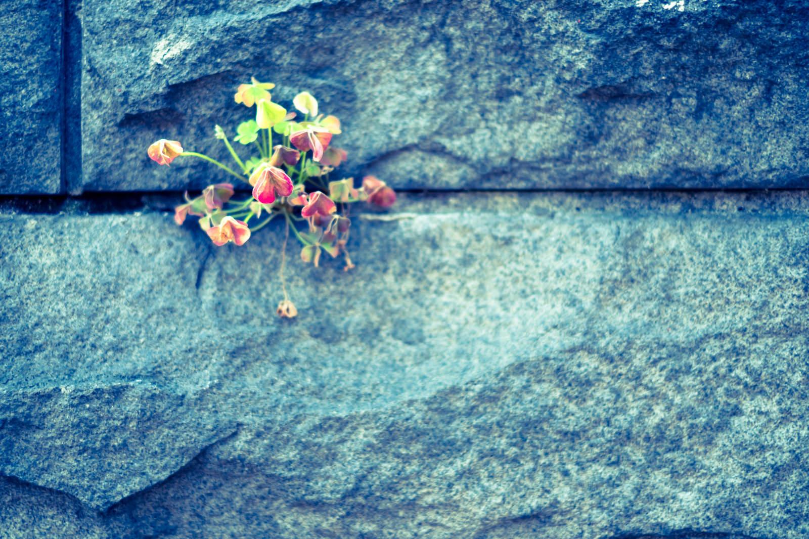 「護岸と草花」の写真