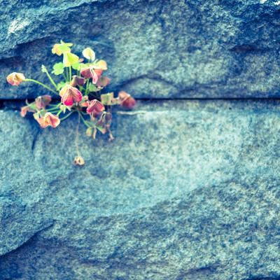 護岸と草花の写真