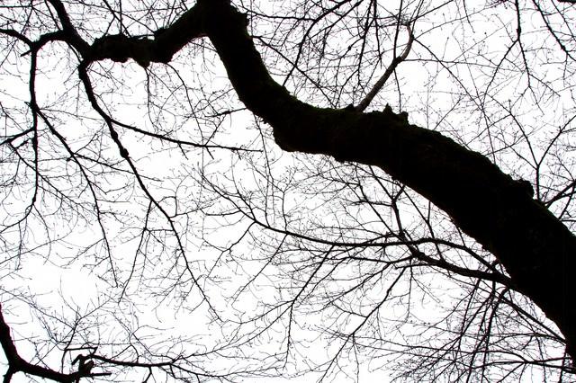 不気味な木の枝の写真