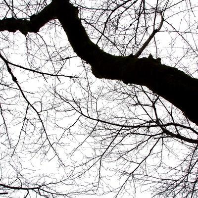 「不気味な木の枝」の写真素材