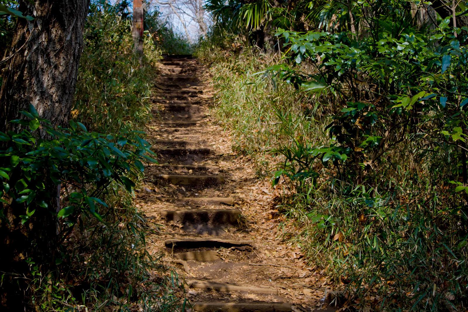 「不気味な山道の階段」の写真