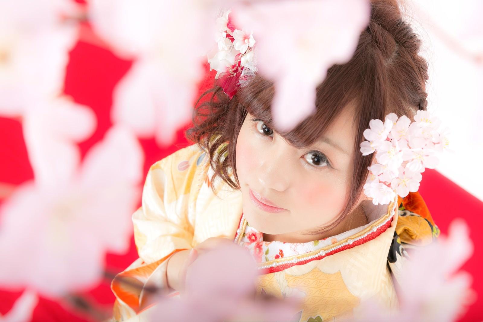 「着物美人と見上げる桜」の写真[モデル:河村友歌]