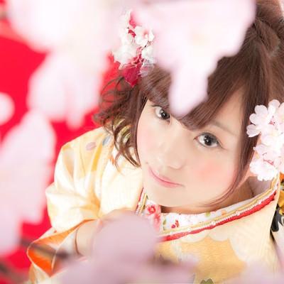 着物美人と見上げる桜の写真