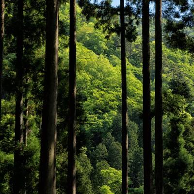 丹沢の緑あふれる森の写真