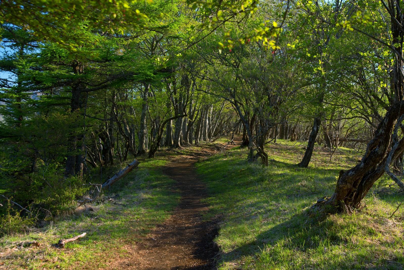 「穏やかな鍋割山の登山道」の写真