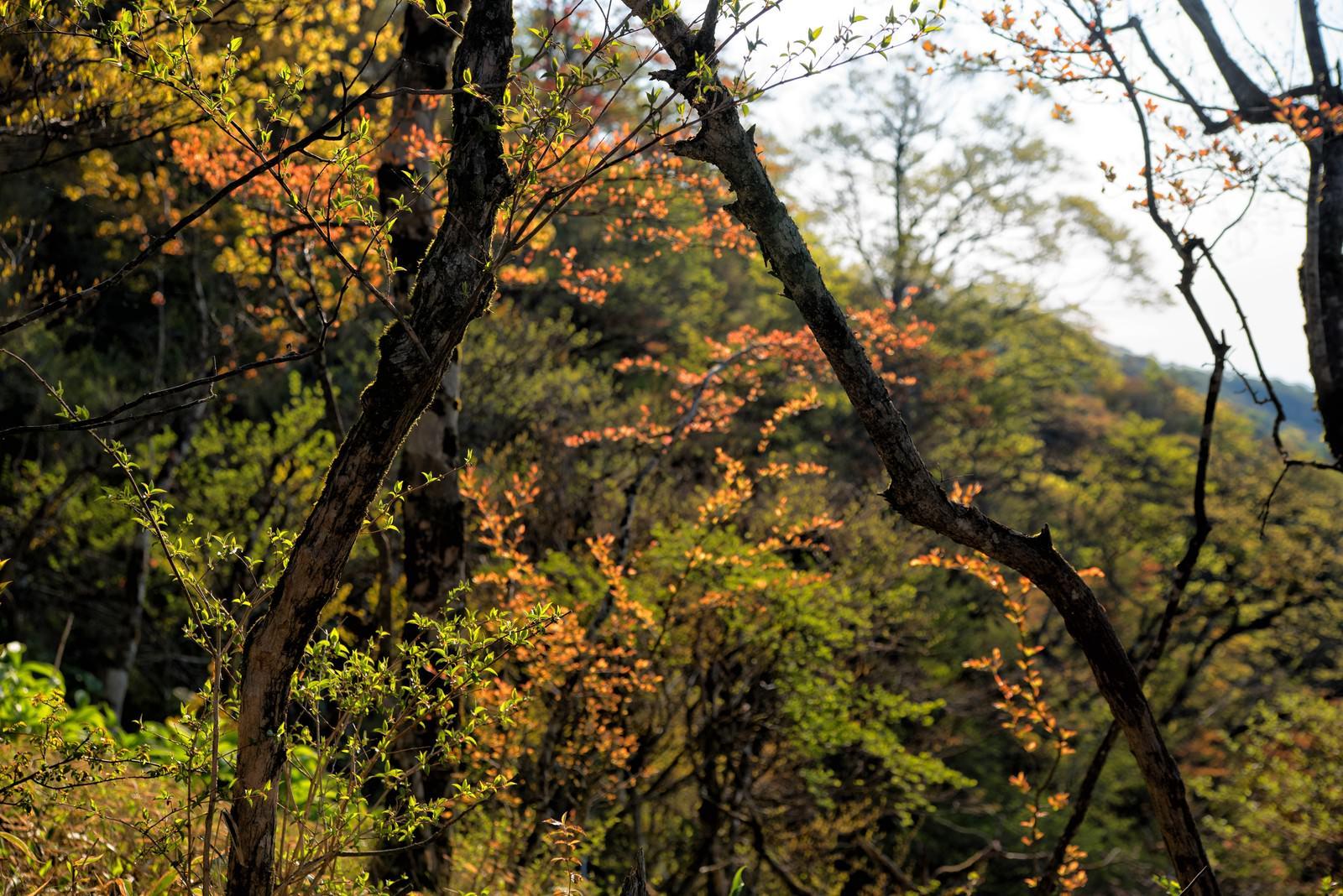 「色彩溢れる丹沢の森」の写真