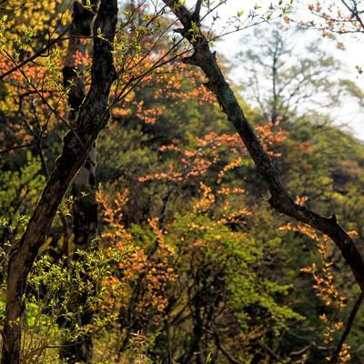色彩溢れる丹沢の森の写真