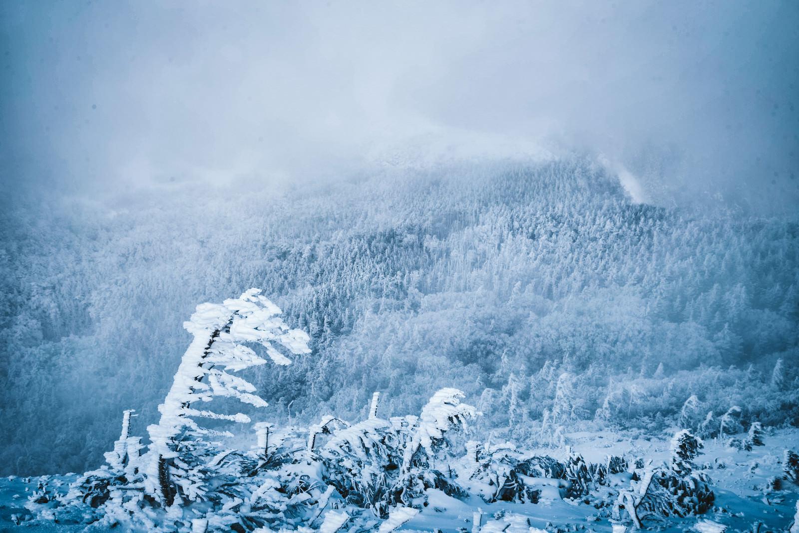 「エビの尻尾と吹雪く白銀の森」の写真