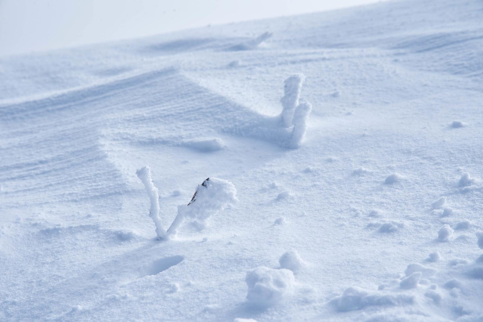 「厳冬に現れるリトルモンスター(樹氷)」の写真