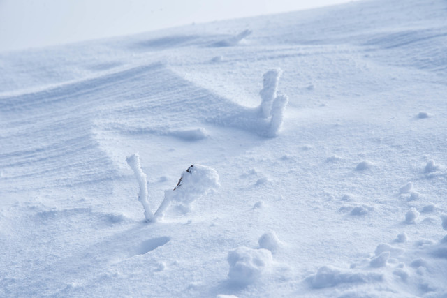 厳冬に現れるリトルモンスター(樹氷)の写真
