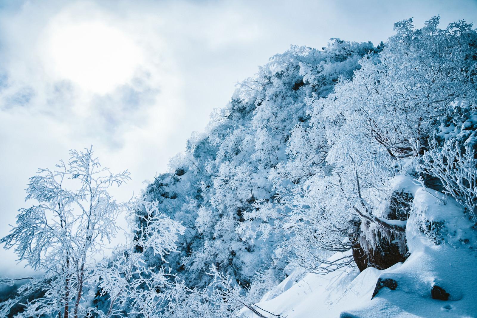 「幻想的な樹氷の白銀の世界」の写真