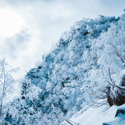 幻想的な樹氷の白銀の世界の写真
