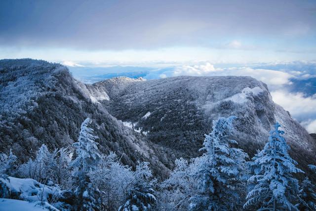 白銀に染まる樹氷の森(北八ヶ岳)の写真