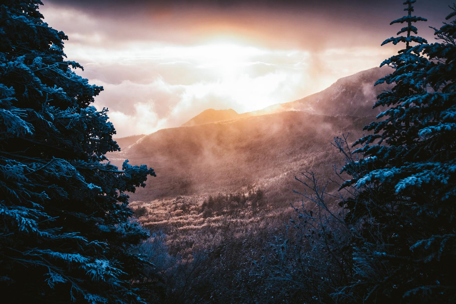 「幻想的な白銀の森の夜明け」の写真