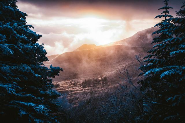 幻想的な白銀の森の夜明けの写真