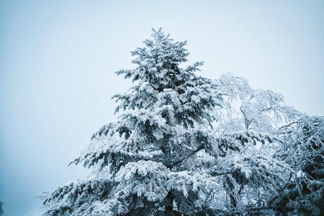 いてつく樹氷の写真