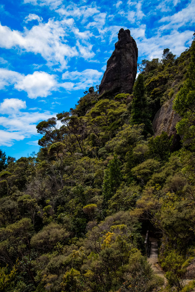 登山道から見上げるウィンディキャニオンの巨岩(ニュージーランド)の写真