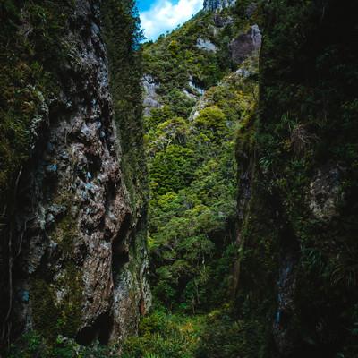 剥き出しの岩壁と生い茂る木々に覆われるウィンディキャニオンの谷間(ニュージーランド)の写真