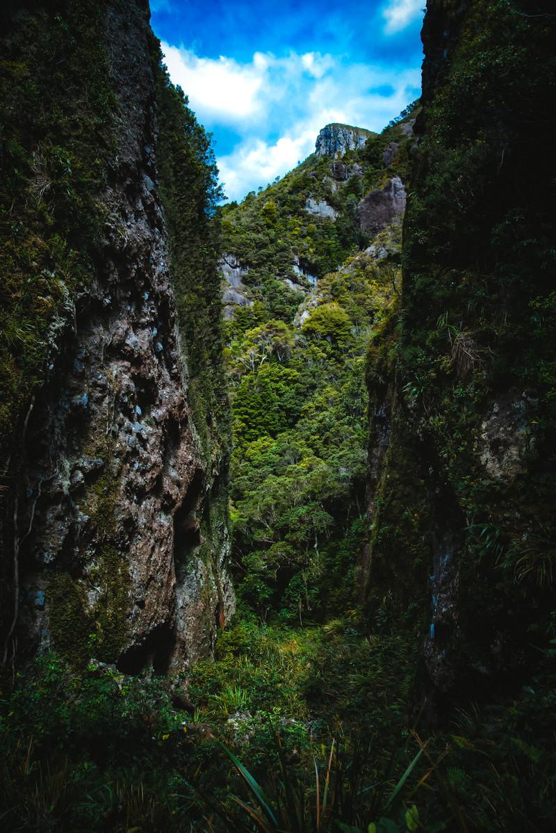 「剥き出しの岩壁と生い茂る木々に覆われるウィンディキャニオンの谷間(ニュージーランド)」の写真