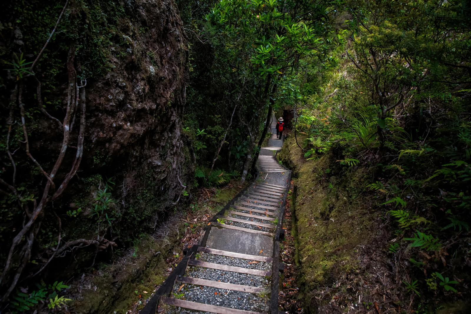 「ウィンディキャニオンの長い階段を下る旅行者」の写真