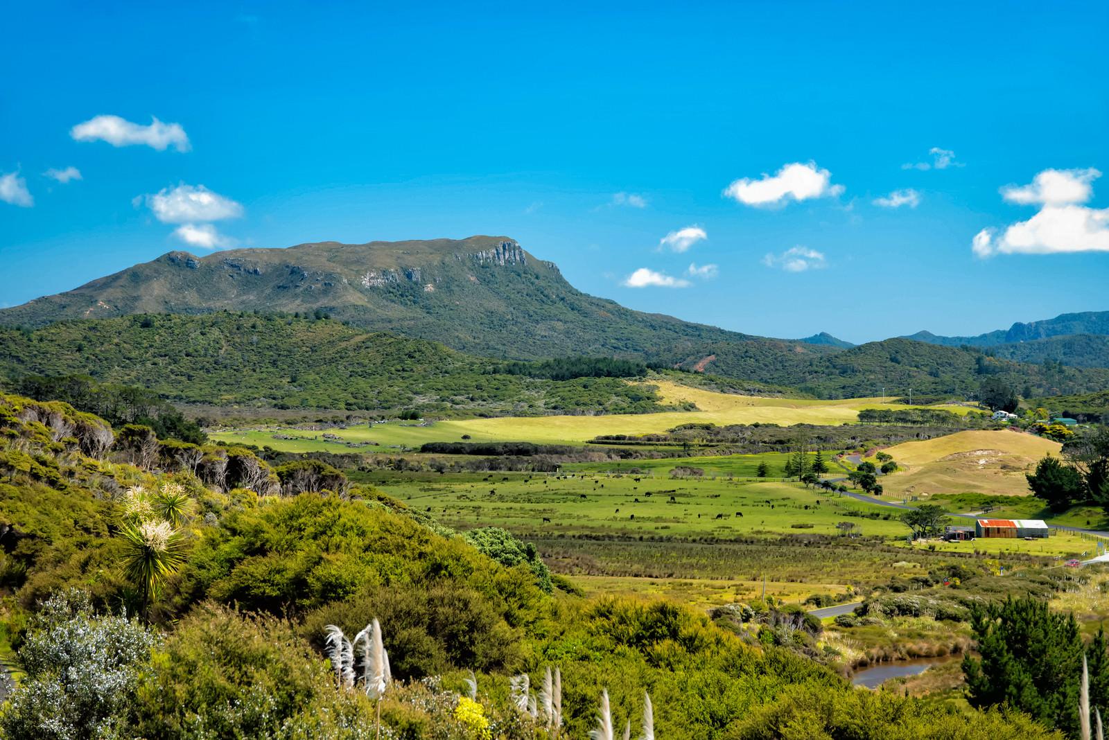 「グレートバリア島の自然からなる姿(ニュージーランド)」の写真