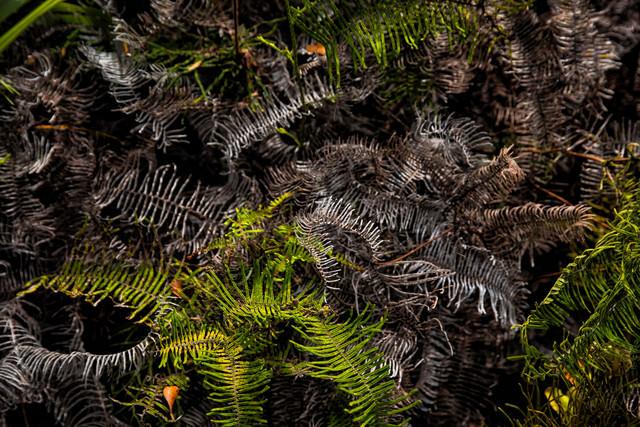 枯れゆくシダ植物の写真