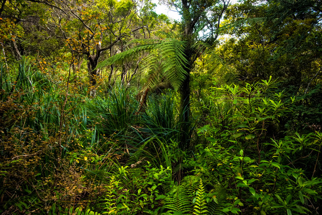 ニュージーランドの原生林の写真