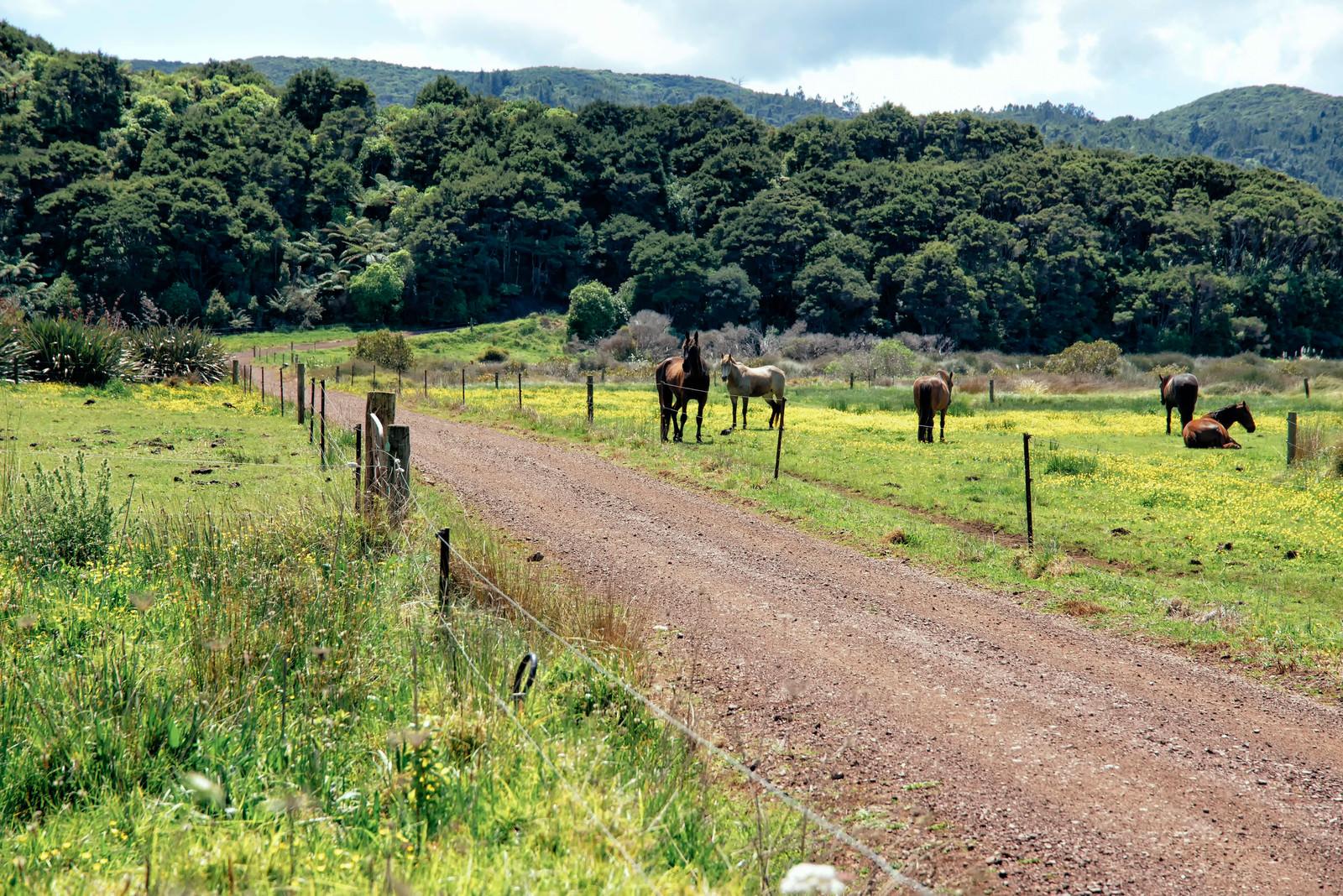 「放牧される馬」の写真