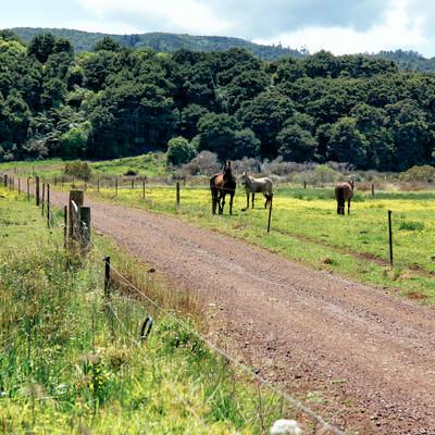 放牧される馬の写真