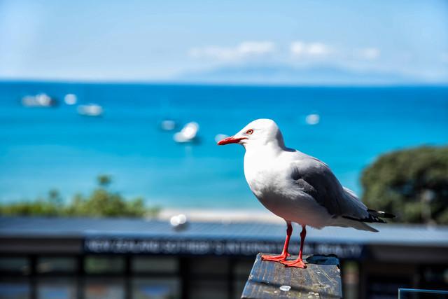 ニュージーランドの海岸沿いの風景と海鳥の写真