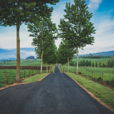 ニュージーランド郊外の果てしなく続く道路の写真