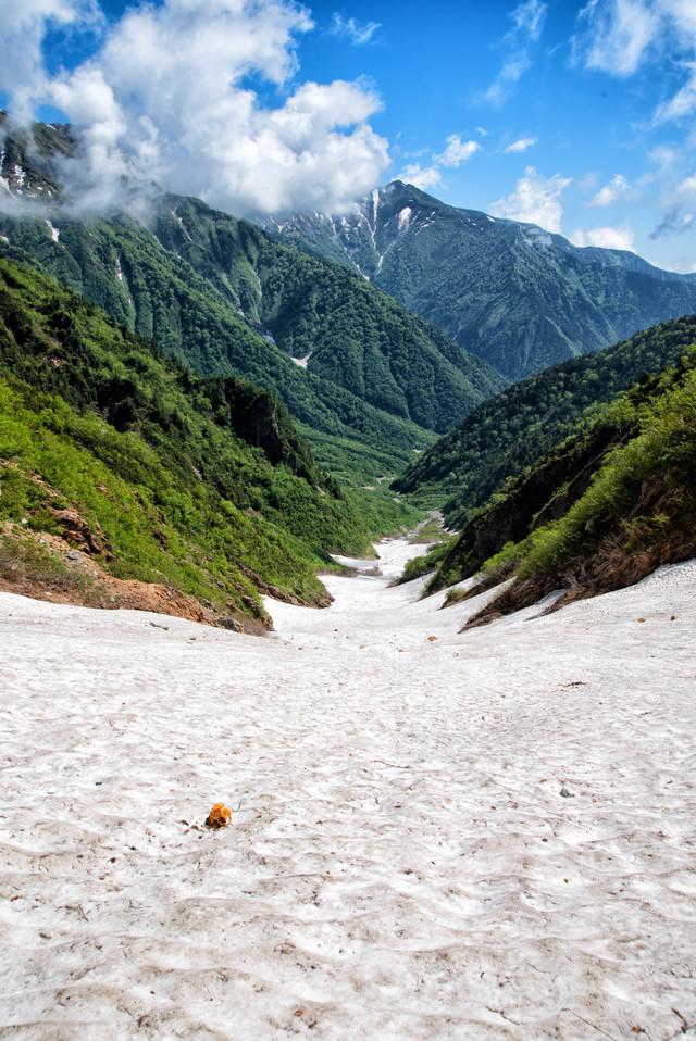 新緑の山並みと針ノ木大雪渓(日本三大雪渓)の写真